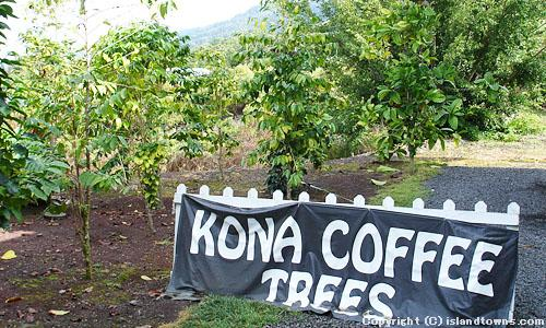 ROYAL KONA MUSEUM & COFFEE MILL 3